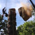 枯れたモミの木、直径140cm。完結編