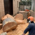 保存樹木の伐採